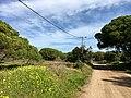 Faro, Algarve (32419834582).jpg