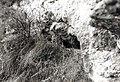Fehér-parti 3. sz. barlang.jpg
