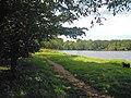 Felbrigg Pond 29 July 2014 (3).JPG
