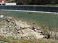 Felsengrund im Flussbett - panoramio.jpg