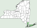 Fimbristylis castanea NY-dist-map.png