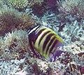 Fish 15 (30961946686).jpg