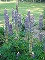 Fleur bleue 3.jpg