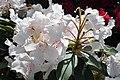 Fleurs et bourgeons, mai 2015.jpg