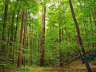 Deciduous Trees or shrubs that lose their leaves seasonally