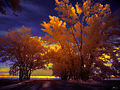 Flickr - paul bica - sunset (1).jpg