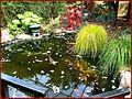 Flickr - ronsaunders47 - Japaneese ornamental pond..jpg
