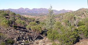 Ikara-Flinders Ranges National Park - Ikara-Flinders Ranges National Park