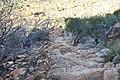 Flinders Ranges SA 5434, Australia - panoramio (64).jpg