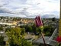 Flor - panoramio (6).jpg