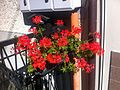 Flora of Esino Lario 2.jpg