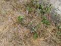 Flower.6416.JPG