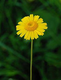 Flower April 2010-6.jpg