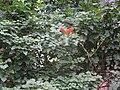 Flower Sammal.jpg