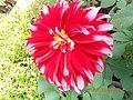 Flower in the beautiful gardens.jpg