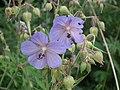 Flowers, Dobrzenice.jpg