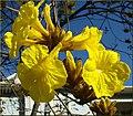 Flowers, Parkwood and Olive, Redlands 1-24-13a (8595963638).jpg