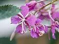 Flowers (9519728436).jpg