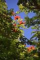 Flowers - panoramio (43).jpg
