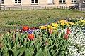 Flowers on Potsdam street 6 (April, 2018).jpg