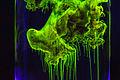 Fluorescein in ammonia solution (2).jpg