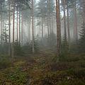 Fog in a forest, Telemark 1.jpg