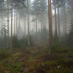 Lesy upravujú teplotu a vlhkosť krajiny. Spevňujú a chránia pôdu.