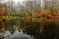 Foggy-autumn-lake - Virginia - ForestWander.jpg