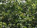 Follaje verde al sol.jpg
