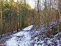 Footpath, Friston Forest - geograph.org.uk - 132033.jpg