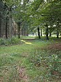 Footpath inside Chase Woods - geograph.org.uk - 260610.jpg