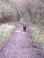 Footpath to Bemerton - geograph.org.uk - 330820.jpg