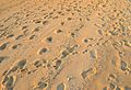 Footprints in the sand. (5275647238).jpg