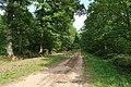 Forêt domaniale de Bois-d'Arcy 44.jpg