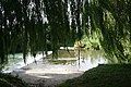 Ford though the willows - geograph.org.uk - 1461357.jpg