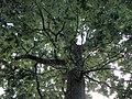 Forest - panoramio - paulnasca (87).jpg