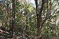 Forest in Mt.Amabiki 02.jpg