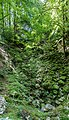 Forest near Gorges du Pont du Diable 01.jpg