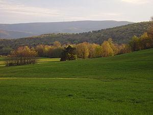 Forkston Mountain - Forkston Mountain