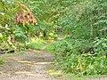 Forst Grunewald - Waldweg beim Barssee (Grunewald Forest - Woodland Path by Bars Lake) - geo.hlipp.de - 41391.jpg