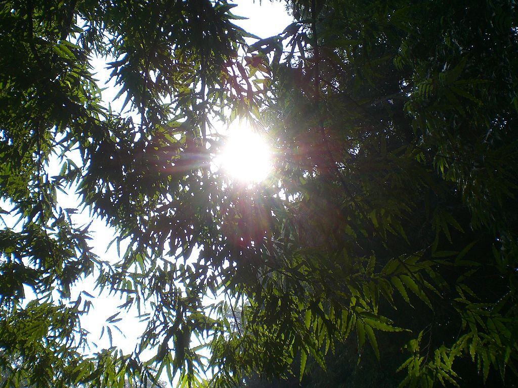 File fresh sun rays between trees law garden ahmedabad for Garden law trees