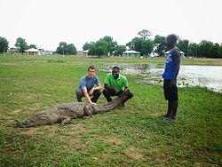 Friendly Paga Crocodile I.jpg