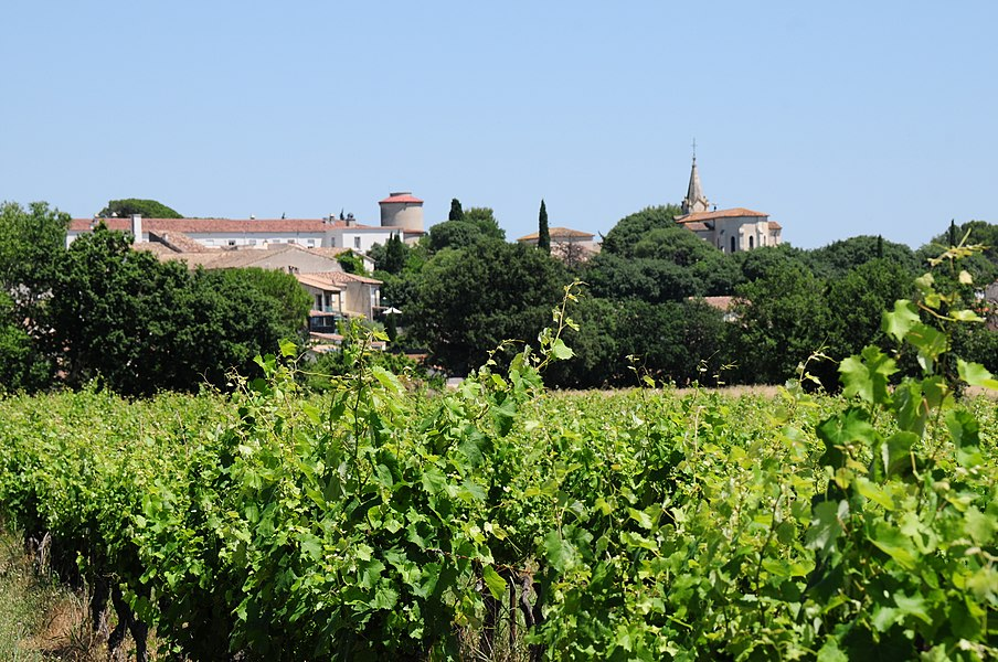 From the vineyard looking up to the panorama of Viirargues