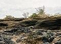Galapagos (47441997581).jpg