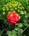 Garden Array with Rose - Tryavna - Bulgaria (42333714085).jpg
