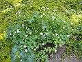 Gardenology-IMG 7873 hunt10aug.jpg