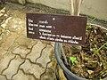 Gardenology.org-IMG 8033 qsbg11mar.jpg