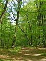 Gdansk Smegorzyno las.jpg