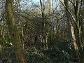 Gedling Wood - geograph.org.uk - 1127216.jpg