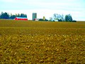 Geese in the Field - panoramio.jpg